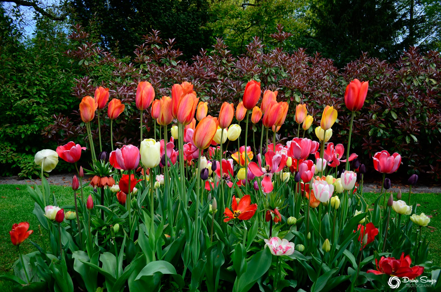 Keukenhof – The Netherlands
